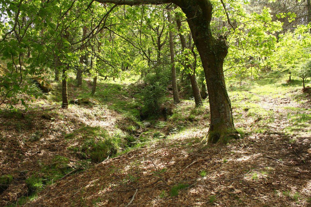 Monte Aloia en Galicia
