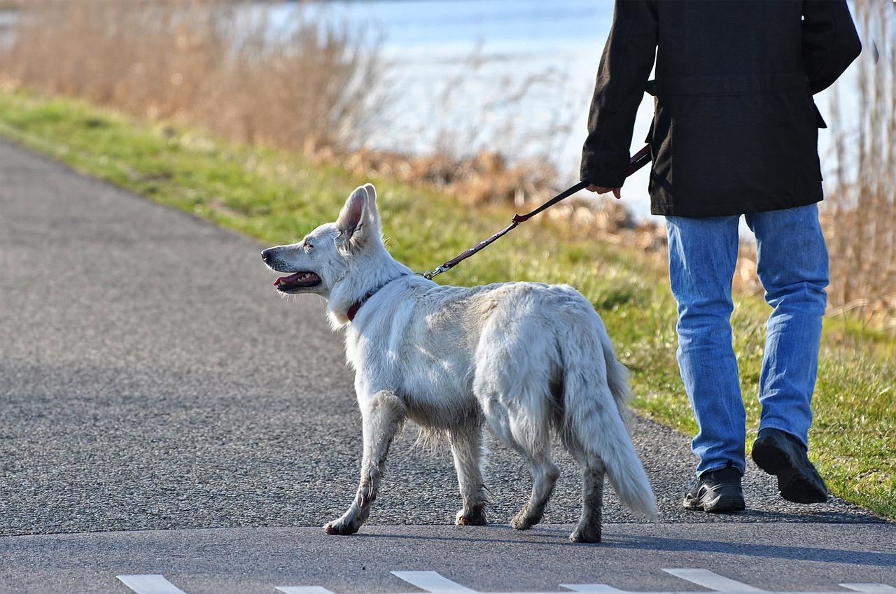 Hombre paseando a su perro en Foz