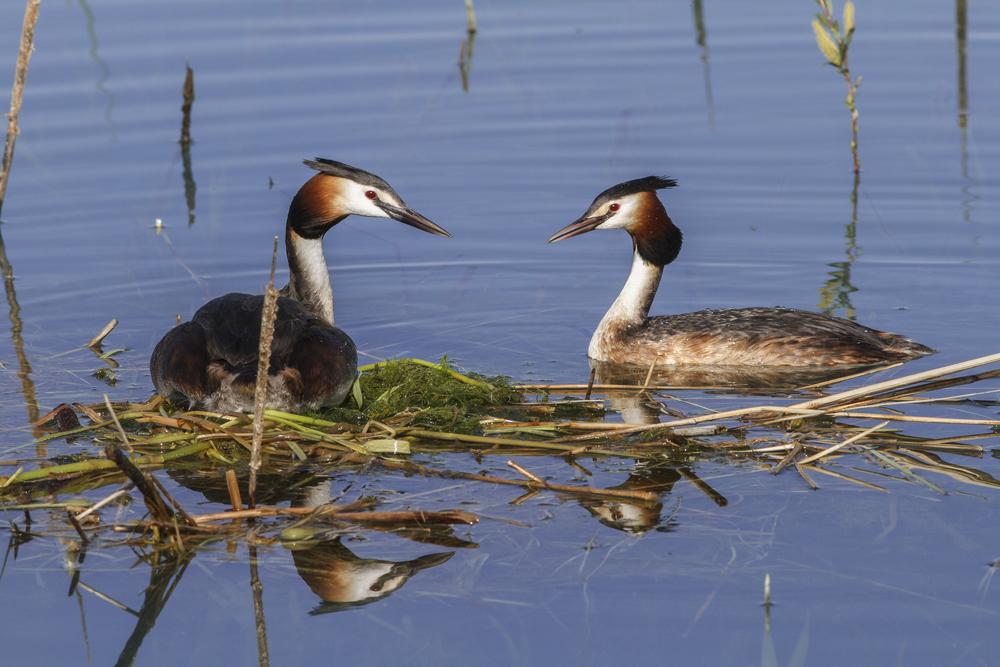 Aves en Galicia